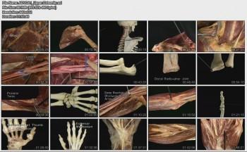 دانلود مجموعه کامل Atlas of Human Anatomy Pack آناتومی بدن انسان