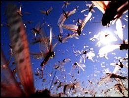 Swarm-Nature-Incredible-Invasions1-www.download.ir