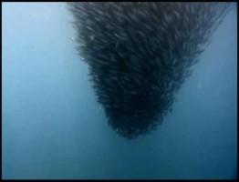 Swarm-Nature-Incredible-Invasions2-www.download.ir