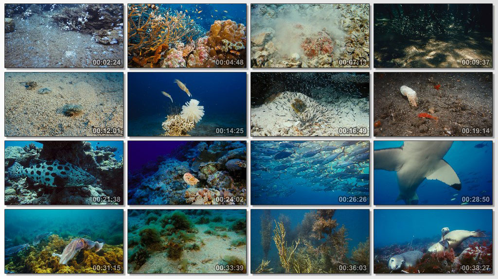 IMAX Under The Sea - Screen