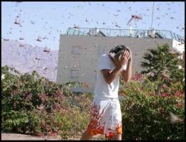 BBC-Swarm-Nature-Incredible-Invasions2-www.download.ir