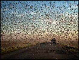 BBC-Swarm-Nature-Incredible-Invasions3-www.download.ir