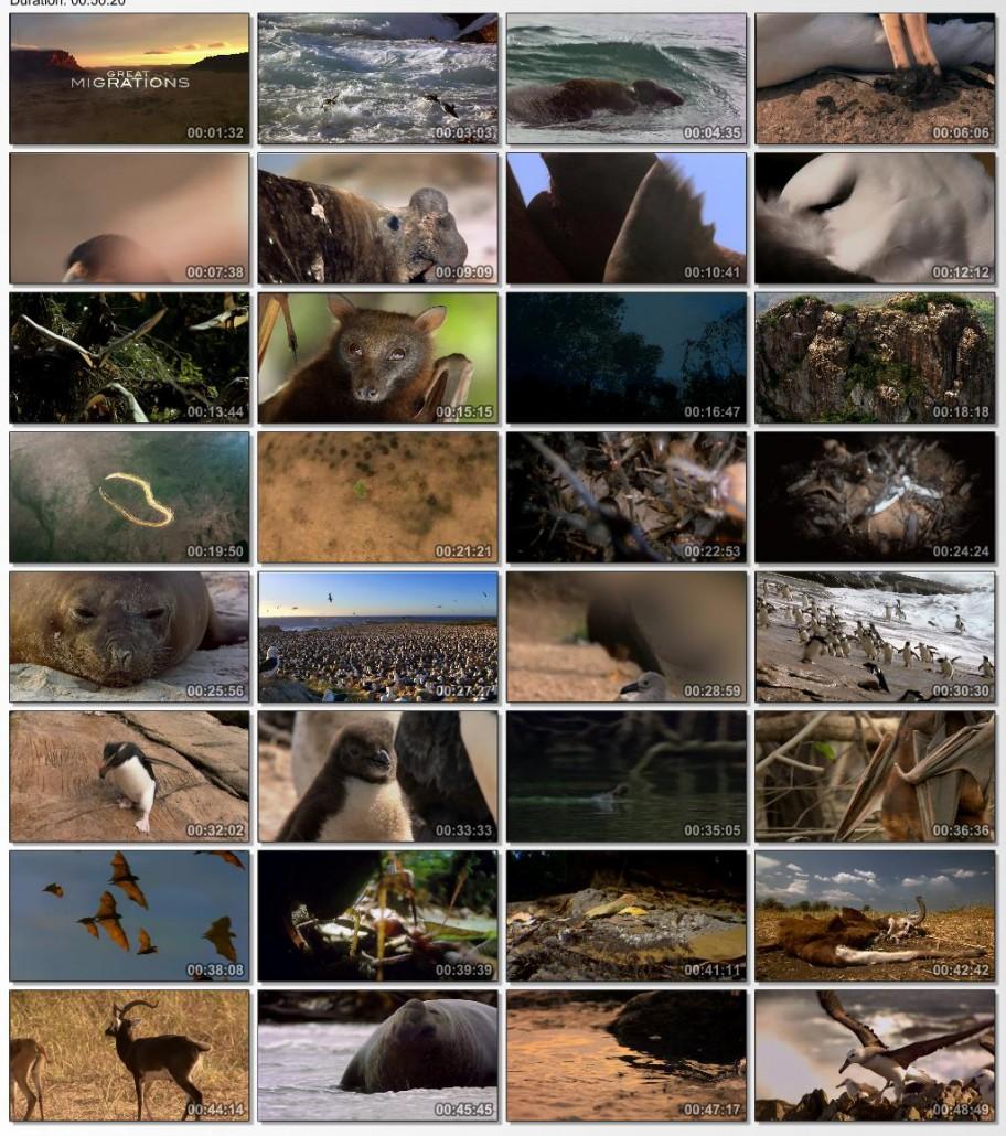 دانلود سری کامل مستند دیدنی بزرگترین مهاجرت حیات وحش