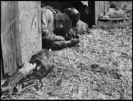 The-First-world-war1-www.download.ir