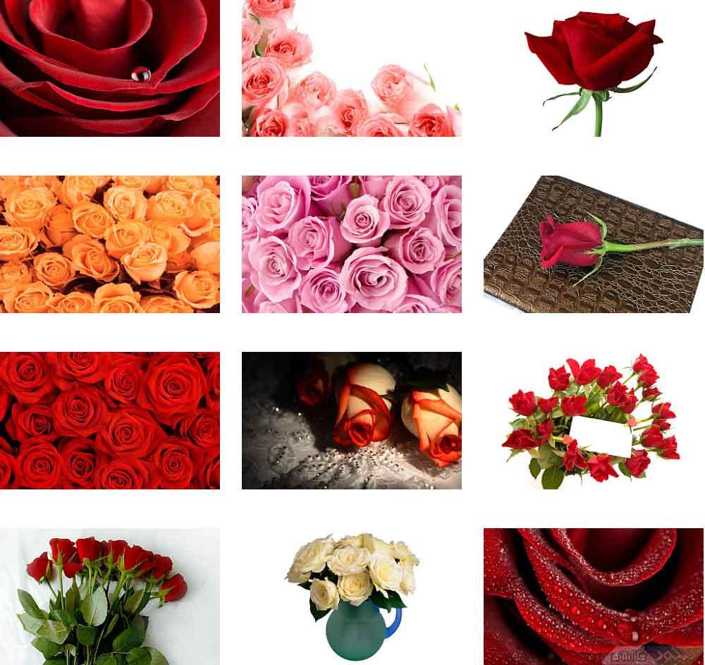 دانلود عكس پس زمینه گل های جديد Flowers Wallpapers