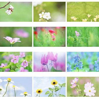 Beautiful.Flowers.Wallpaper.www.Download.ir