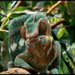 دانلود فیلم مستند Little Monsters 3D هیولاهای کوچک