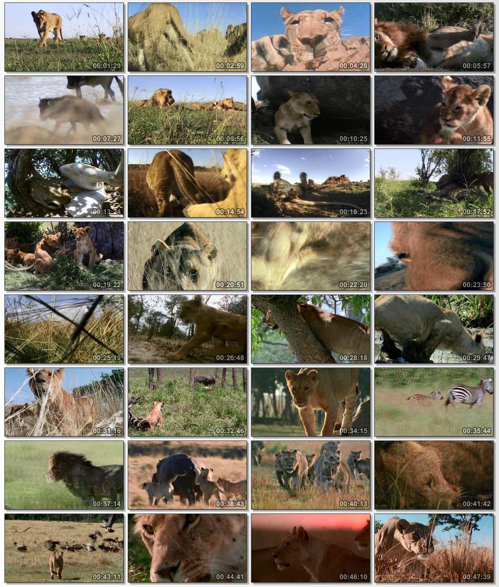 دانلود مستند سریالی BBC Wildlife Specials حیوانات استثنایی