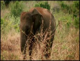 BBC.Natural.World.2013.Sri.Lanka.Elephant.Island1.www.download.ir