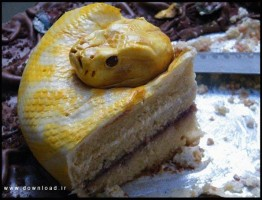 Cake-www.download.ir (3)