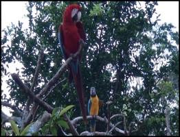 Faszination.Amazonas1.www.download.ir