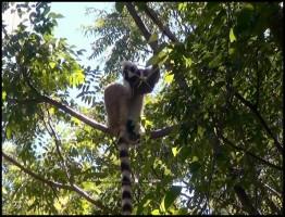 Madagascar1.www.download.ir