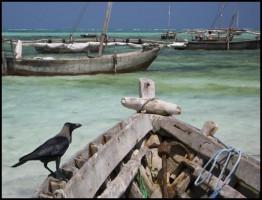 Wildest Island, Zanzibar