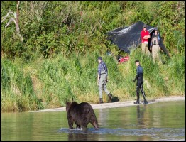 Great Bear Stakeout.www.download.ir