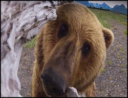 Great Bear Stakeout1.www.download.ir