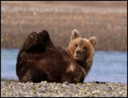 Great Bear Stakeout3.www.download.ir