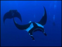 The Magic of The Big Blue.www.download.ir