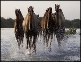 Wild Arabia 2013.1.www.download.ir