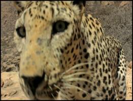 Wild Arabia 2013.3.www.download.ir