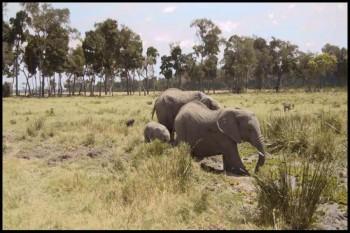 Amazing Africa 2013