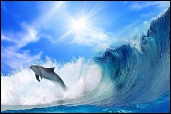 Amazing Ocean 2013