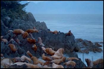 IMAX Alaska Spirit Of The Wild