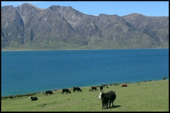 New Zealand The Forgotten Paradise2.download.ir