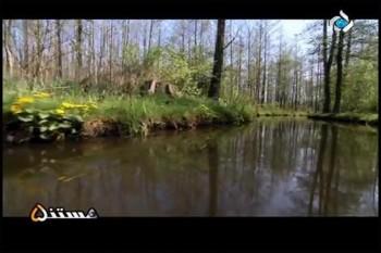 جنگل اشترووان