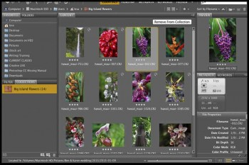 Adobe-Bridge-CC.Download.ir