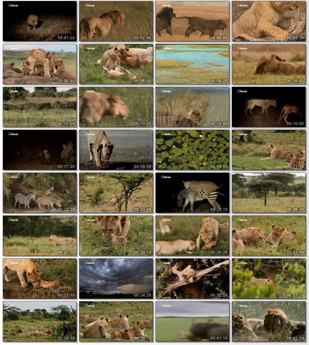 National Geographic Game Of Lions