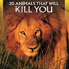 20Animals That Will Kill You