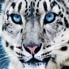 دانلود مجموعه کلیپ های Animal Attacks Compilation 2014 HD حمله حیوانات