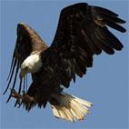 دانلود کلیپ Golden Eagle Snatches Kid ربوده شدن یک بچه توسط عقاب