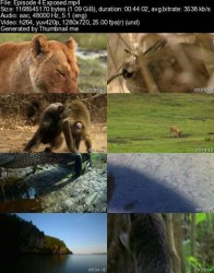 National Geographic Secret Life of Predators 2013