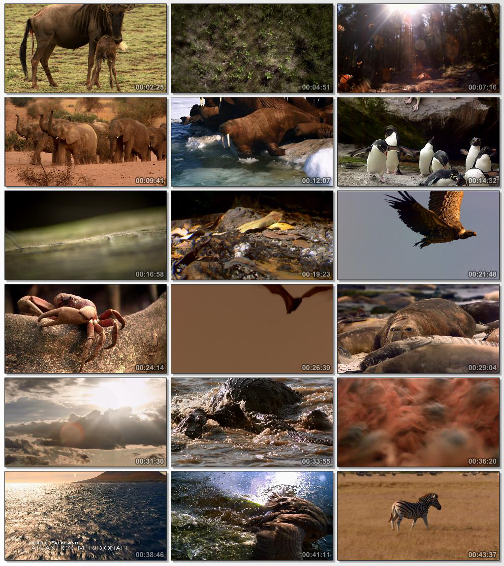 National.Geographic.Great.Migrations.www.Download.ir.jpg