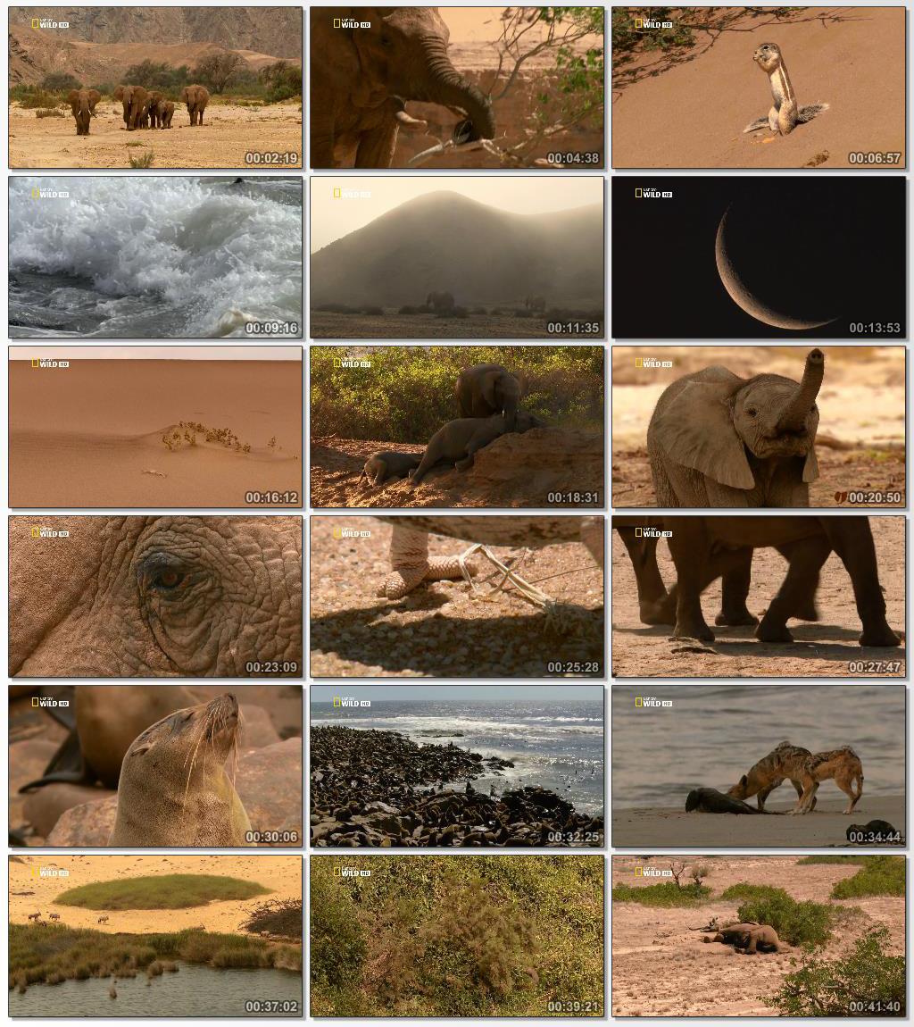 National.Geographic.Secrets.of.The.Desert.Elephants.www.Download.ir