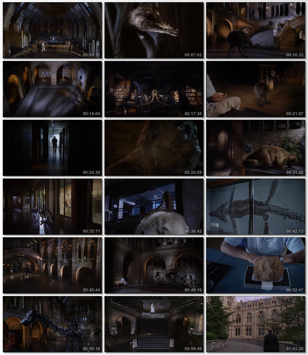 David Attenborough's Natural History Museum Alive 2014 1080p BluRay DTS x264-DON.mkv_thumbs_[2014.12.24_12.44.53]