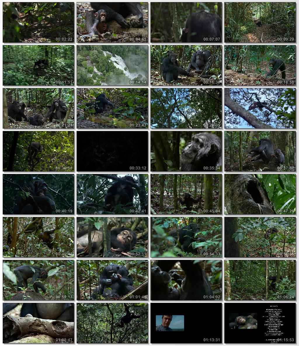 Chimpanzee.2012.720p.www.download.ir.mkv_thumbs_[2015.01.04_11.52.29]