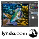 Lynda-Enhancing.Underwater.Photos.with.Photoshop.5x5.www.Download.ir