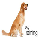 Education.and.training.Dog.5x5.www.Download.ir