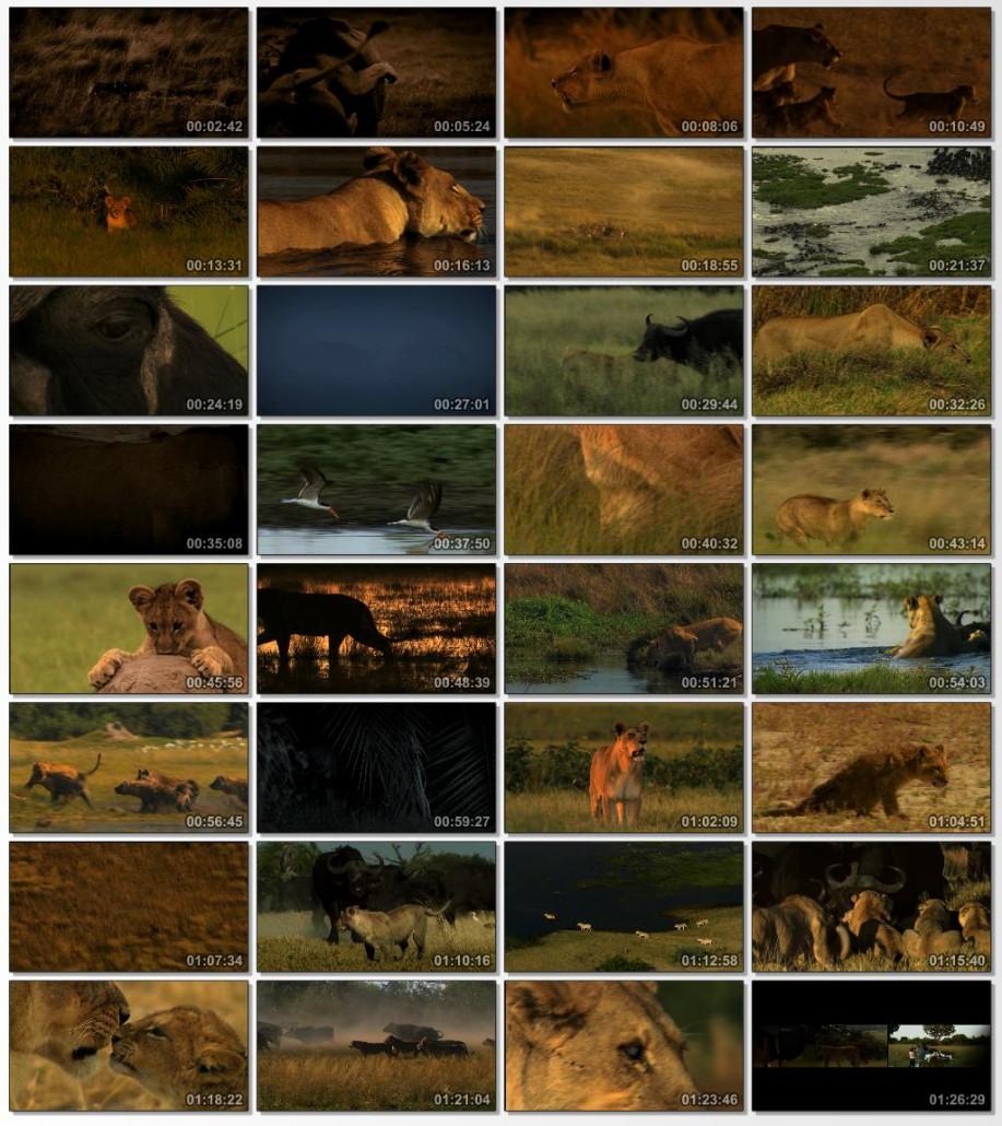 دانلود فیلم مستند The Last Lions 2011