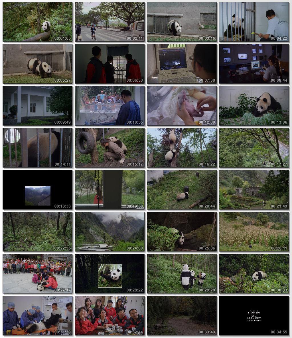 دانلود فیلم مستند Pandas The Journey Home 2014