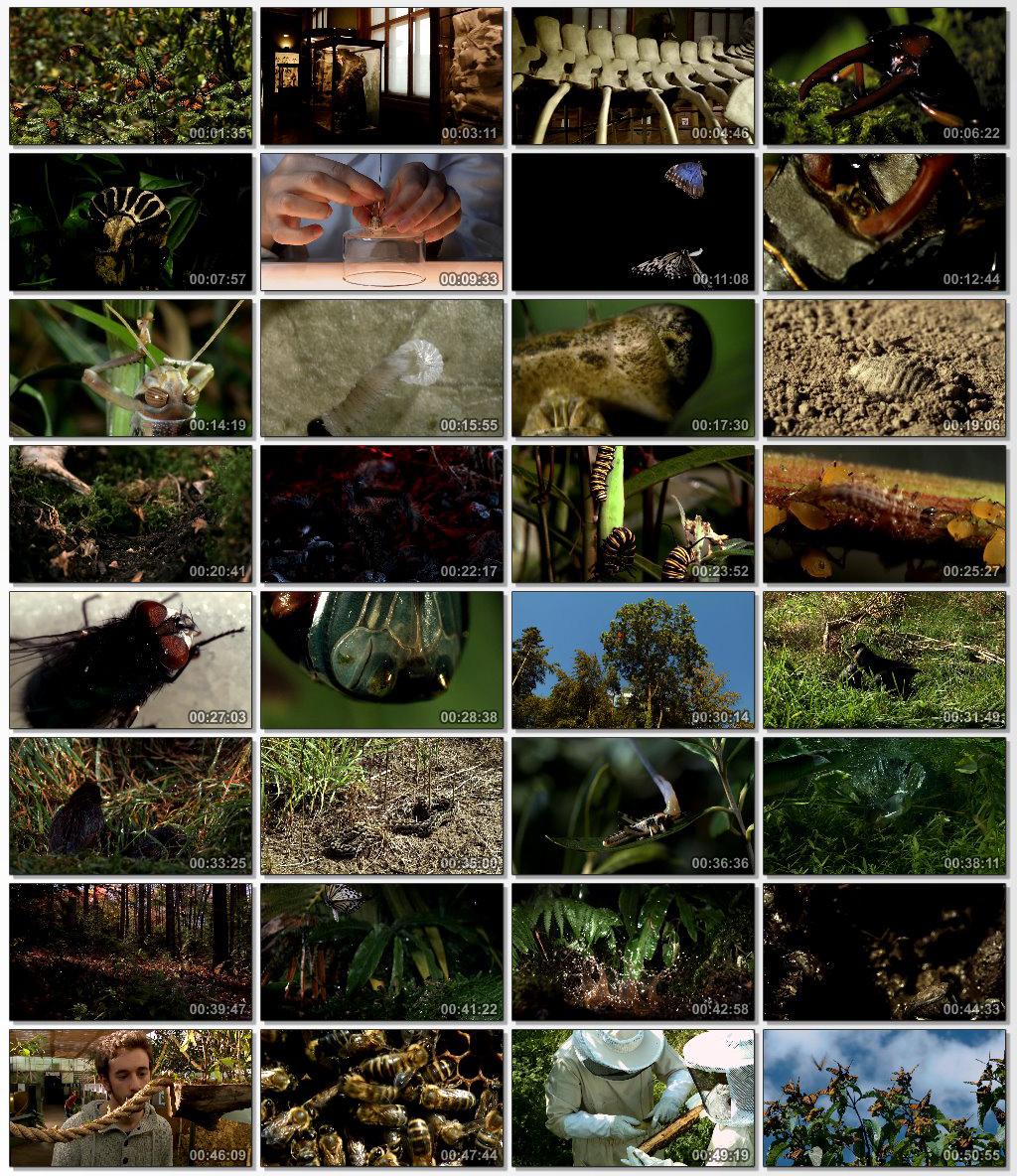 دانلود فیلم مستند Big Bugs 2012