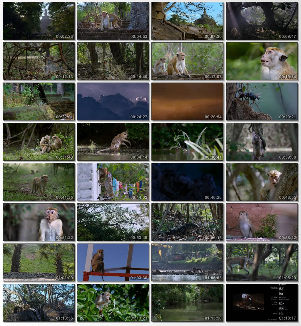 دانلود فیلم مستند Monkey Kingdom 2015