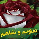 Book Tafavot Va Tafahom