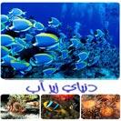 کتاب دنیای زیر آب