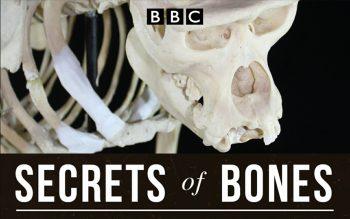دانلود مستند سریالی Secrets Of Bones 2014