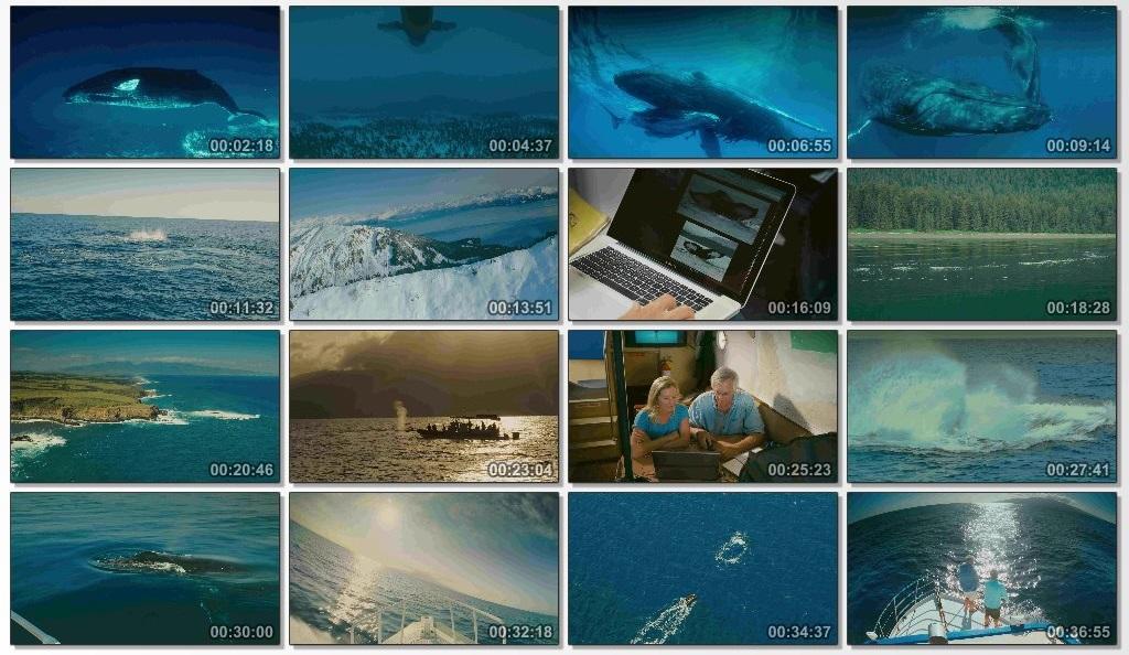 دانلود فیلم مستند Humpback Whales با کیفیت BlueRey 1080P