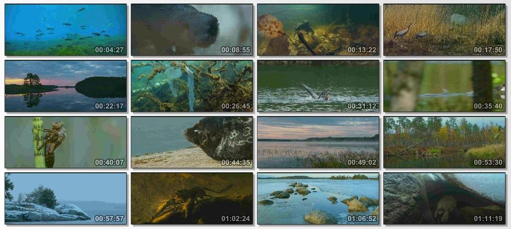 دانلود فیلم مستند Tale Of A Lake 2016 با کیفیت 1080p BluRay
