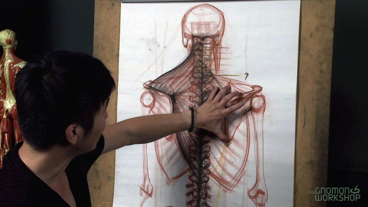 دانلود فیلم آموزشی The Gnomon Workshop Anatomy Workshop vol 1-5